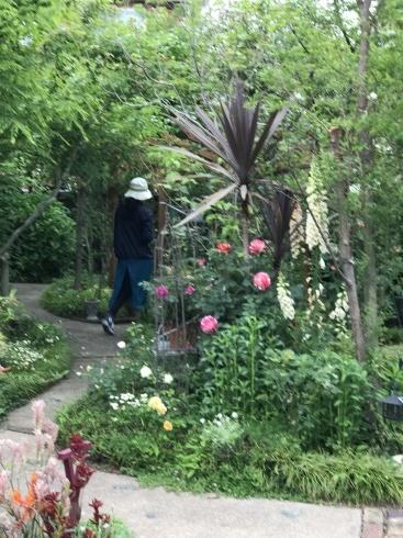 お客様のお庭散策・・・お庭を作られて6年、薔薇を始められて3年・・_b0137969_01543289.jpg