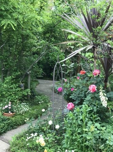 お客様のお庭散策・・・お庭を作られて6年、薔薇を始められて3年・・_b0137969_01552506.jpg
