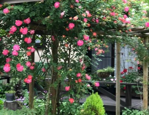 お客様のお庭散策・・・お庭を作られて6年、薔薇を始められて3年・・_b0137969_01554532.jpg