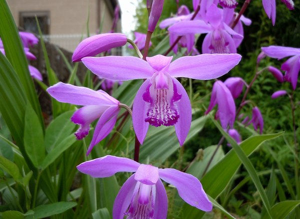路傍の花、樹々の鳥(161) ~ ちょっと馴染みのない名前かも知れませんが ~_b0102572_2124183.jpg
