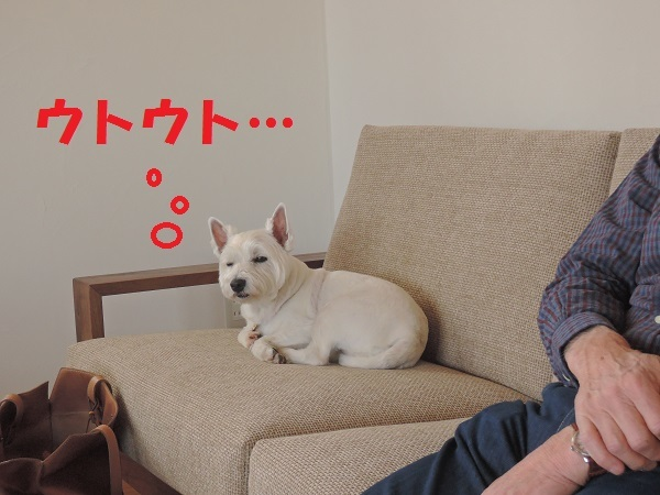 小淵沢 S井さんのお家より^^_a0211886_22414092.jpg