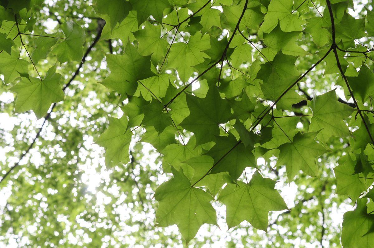 新緑の季節! 静かな木の俣園地でそぞろ歩き : 那須高原ペンション通信(オーナー通信)