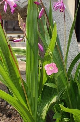 5月に咲く花_e0289203_16021251.jpg