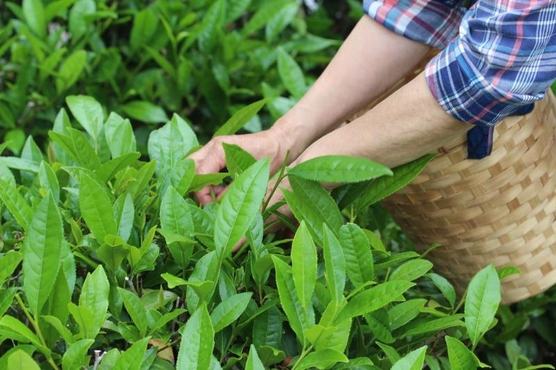 茶LON (43)_b0220318_21441428.jpg