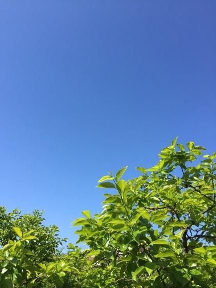 真夏日に前を向いて_a0103940_18080868.jpg