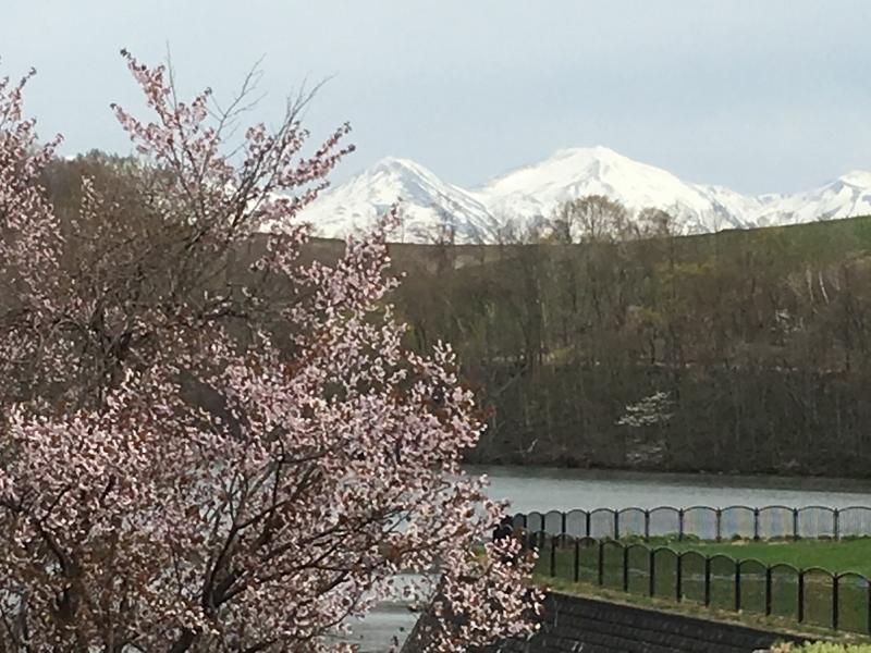 「聖台ダム」の桜と美瑛の庭_e0326953_16450313.jpg