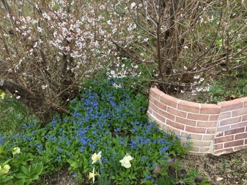「聖台ダム」の桜と美瑛の庭_e0326953_17112936.jpg
