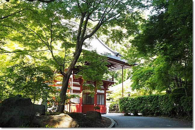 龍福寺の野藤(山藤)_b0053765_21004476.jpg