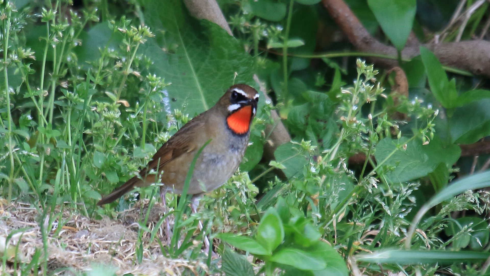 日本海の離島の鳥達その5_f0105570_21284145.jpg