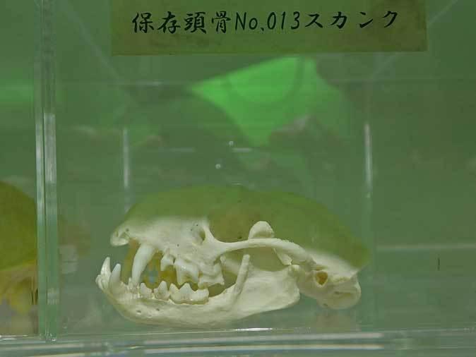 サンシャイン水族館「もうどく展2」~毒を利活用する生物~_b0355317_22021570.jpg