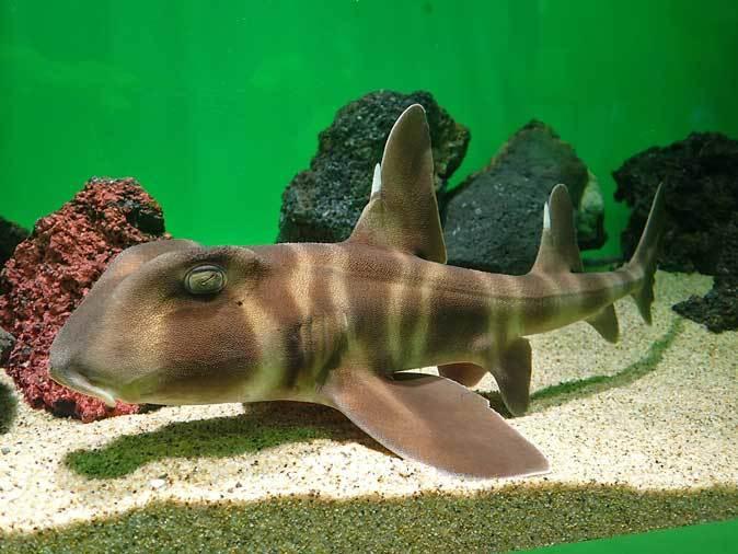 サンシャイン水族館「もうどく展2」~毒を利活用する生物~_b0355317_22030702.jpg