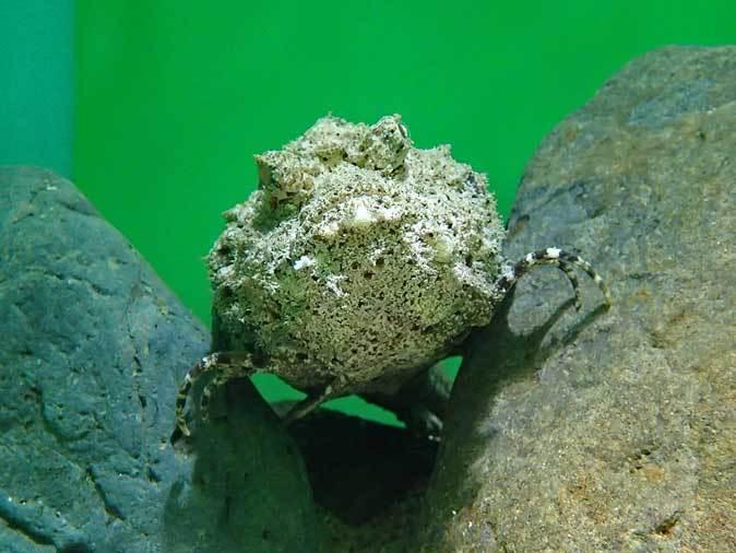 サンシャイン水族館「もうどく展2」~毒を利活用する生物~_b0355317_22054778.jpg