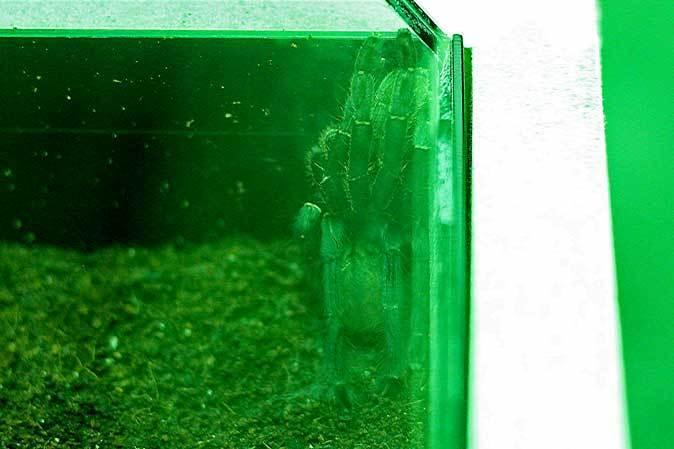サンシャイン水族館「もうどく展2」~毒を利活用する生物~_b0355317_22074102.jpg