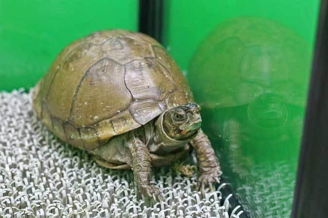 サンシャイン水族館「もうどく展2」~毒を利活用する生物~_b0355317_22111271.jpg