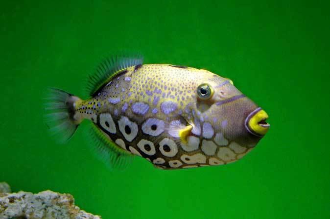 サンシャイン水族館「もうどく展2」~毒を利活用する生物~_b0355317_22154505.jpg