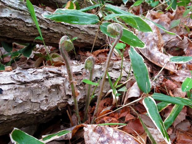 原木しいたけの植菌&収穫なのだ!_c0259934_15110265.jpg