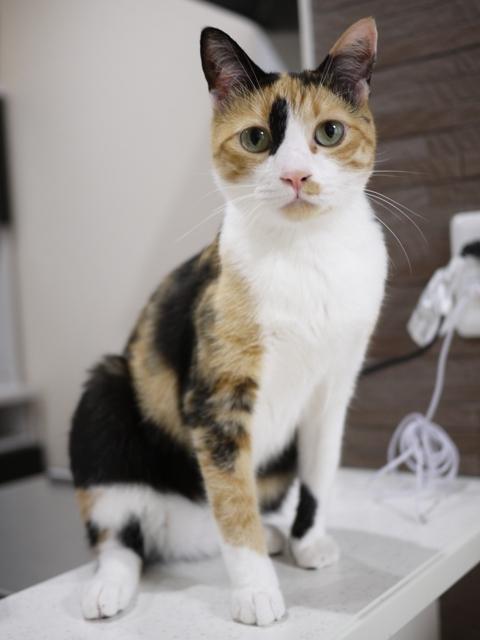 猫のお留守番 ななちゃん編。_a0143140_20385662.jpg