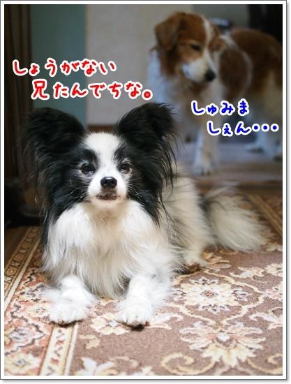 d0013149_00404042.jpg