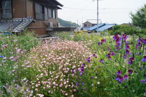 野菜畑が花畑に(笑)_e0181373_21020696.jpg