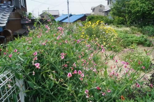 野菜畑が花畑に(笑)_e0181373_21031202.jpg