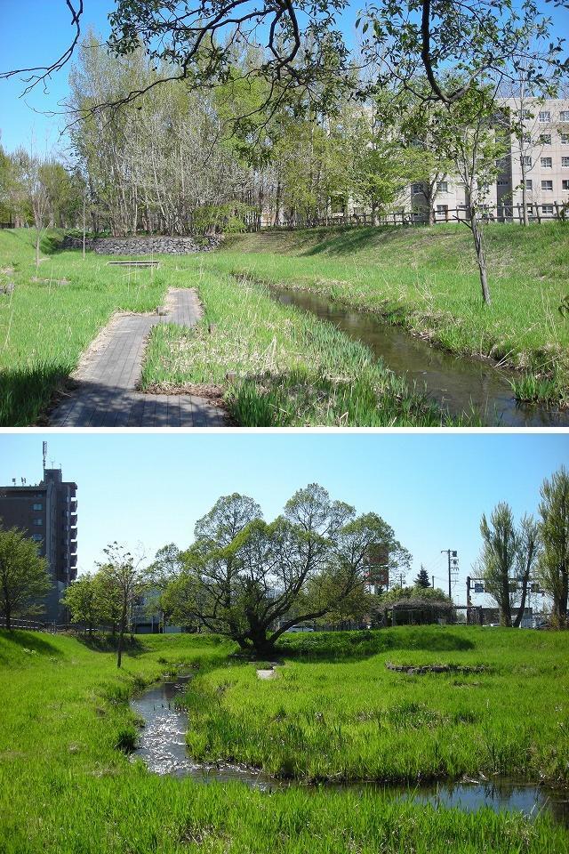 サクシュ琴似川緑地・定点観測_f0078286_20503981.jpg