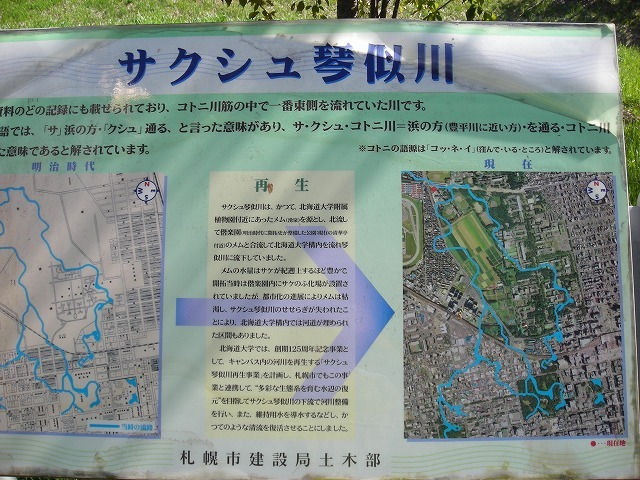 サクシュ琴似川緑地・定点観測_f0078286_20531084.jpg