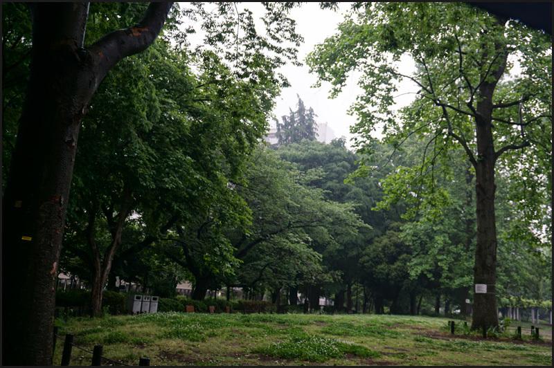 なんだか梅雨時のような雨の東京_b0019313_16273147.jpg