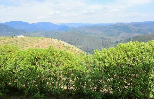 ポルトガルのolive農園へ_c0213220_2222290.jpg