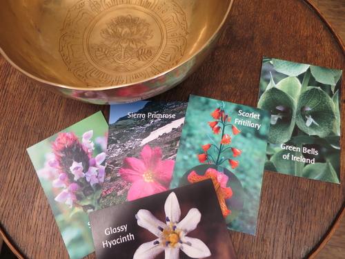 ウエサク祭のアート心理ゲーム、瞑想会を終えて_e0257524_11404518.jpg