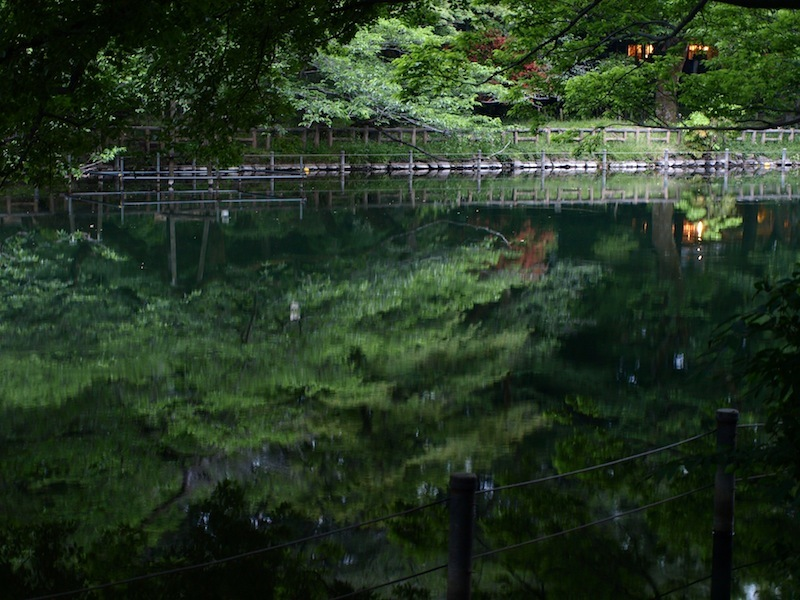 Tokyo Travel Guide Kichijoji Sightseeing 100 -001 Inokashira Park (pond forest cherry blossoms)_e0122680_15581481.jpg