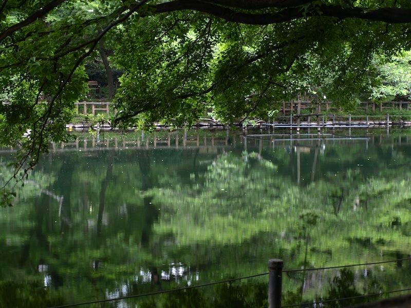 Tokyo Travel Guide Kichijoji Sightseeing 100 -001 Inokashira Park (pond forest cherry blossoms)_e0122680_15584389.jpg