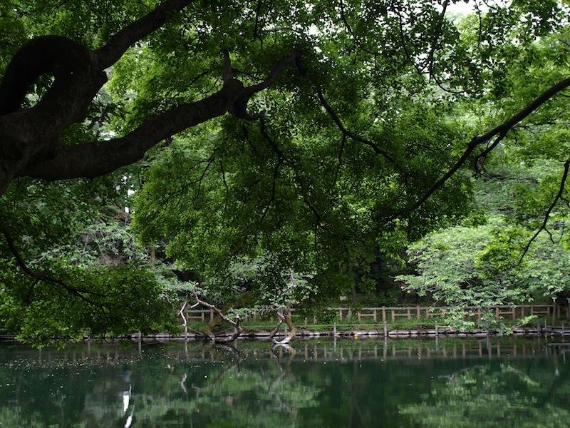 Tokyo Travel Guide Kichijoji Sightseeing 100 -001 Inokashira Park (pond forest cherry blossoms)_e0122680_15590956.jpg