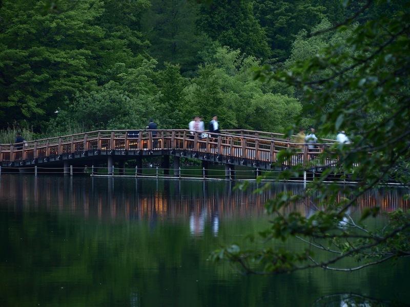 Tokyo Travel Guide Kichijoji Sightseeing 100 -001 Inokashira Park (pond forest cherry blossoms)_e0122680_15595272.jpg