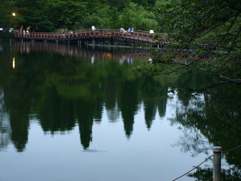 Tokyo Travel Guide Kichijoji Sightseeing 100 -001 Inokashira Park (pond forest cherry blossoms)_e0122680_16010631.jpg