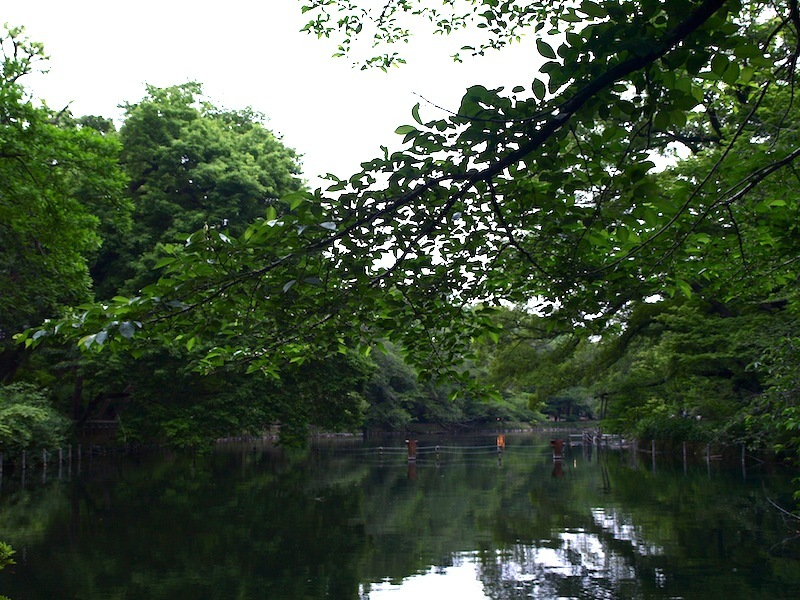 Tokyo Travel Guide Kichijoji Sightseeing 100 -001 Inokashira Park (pond forest cherry blossoms)_e0122680_16020369.jpg