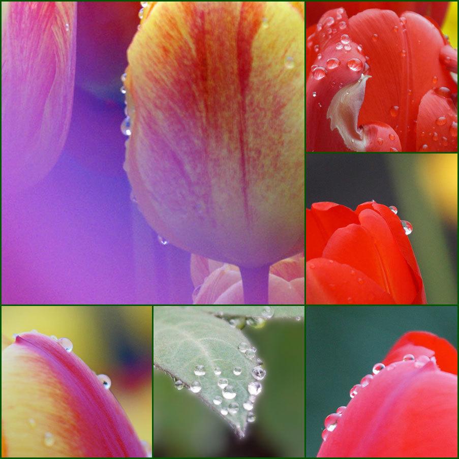 枝垂れ桜とチュウリップ_d0162994_08365302.jpg