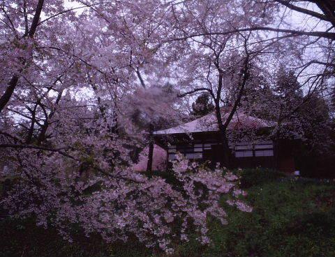 桜を巡りて・・北へ_a0072620_14523867.jpg