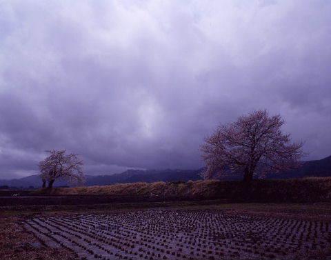 桜を巡りて・・北へ_a0072620_14532127.jpg