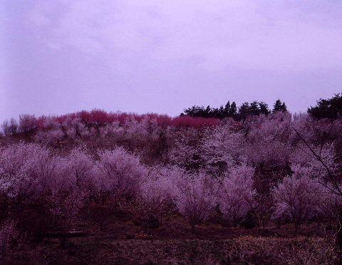 桜を巡りて・・北へ_a0072620_14570576.jpg