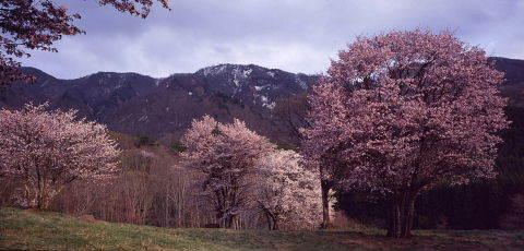 桜を巡りて・・北へ_a0072620_14580476.jpg