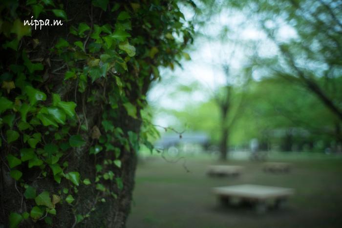 木陰で涼む・・_a0258534_21215760.jpg