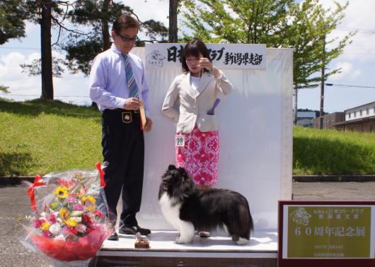 JCC新潟60周年記念展_f0126965_21103957.jpg