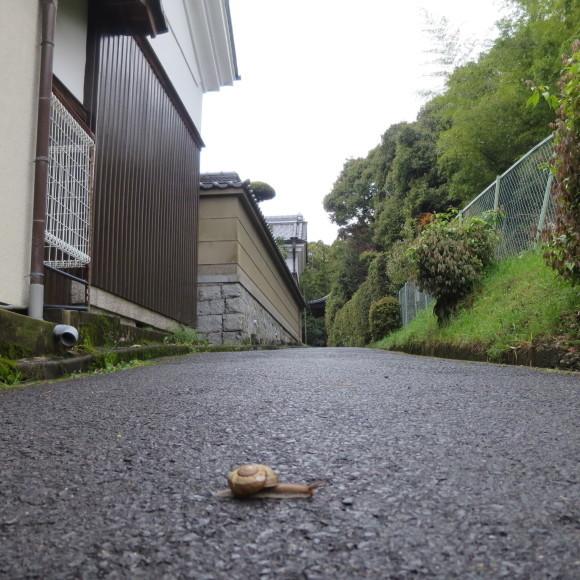 西大寺を北に歩いて行くと_c0001670_16594072.jpg