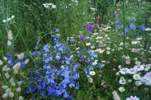 ロベリアなど小花を_e0181373_21143603.jpg
