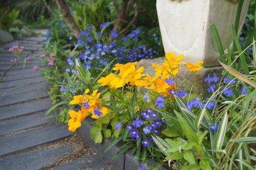 ロベリアなど小花を_e0181373_21144332.jpg