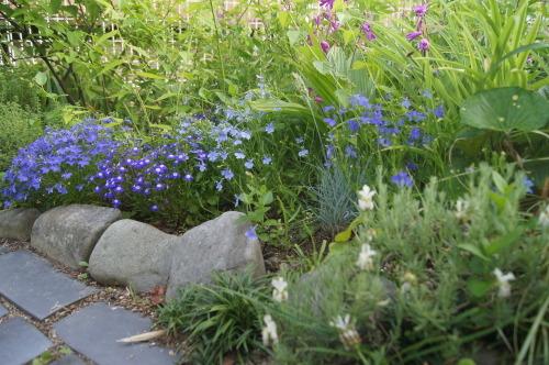 ロベリアなど小花を_e0181373_21145483.jpg
