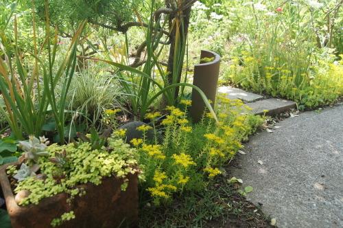 ロベリアなど小花を_e0181373_21161408.jpg