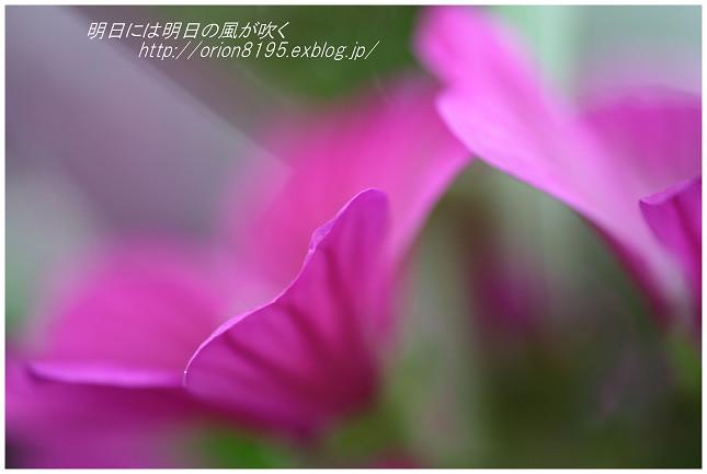 f0361079_20332426.jpg