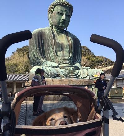 2017 家族旅行 ほったらかし温泉キャンプ3日目~最終日_c0196992_21413610.jpg