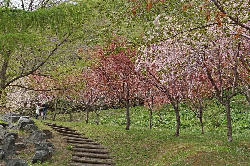 西野西公園_d0162994_09592124.jpg